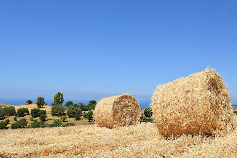 vacanza-dialisi-in-sicilia-a-ragusa-dialisi